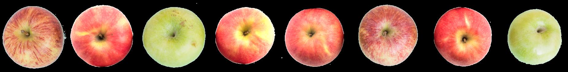 Fruchtsaftgetränke, wie Apfelsaft ensteht